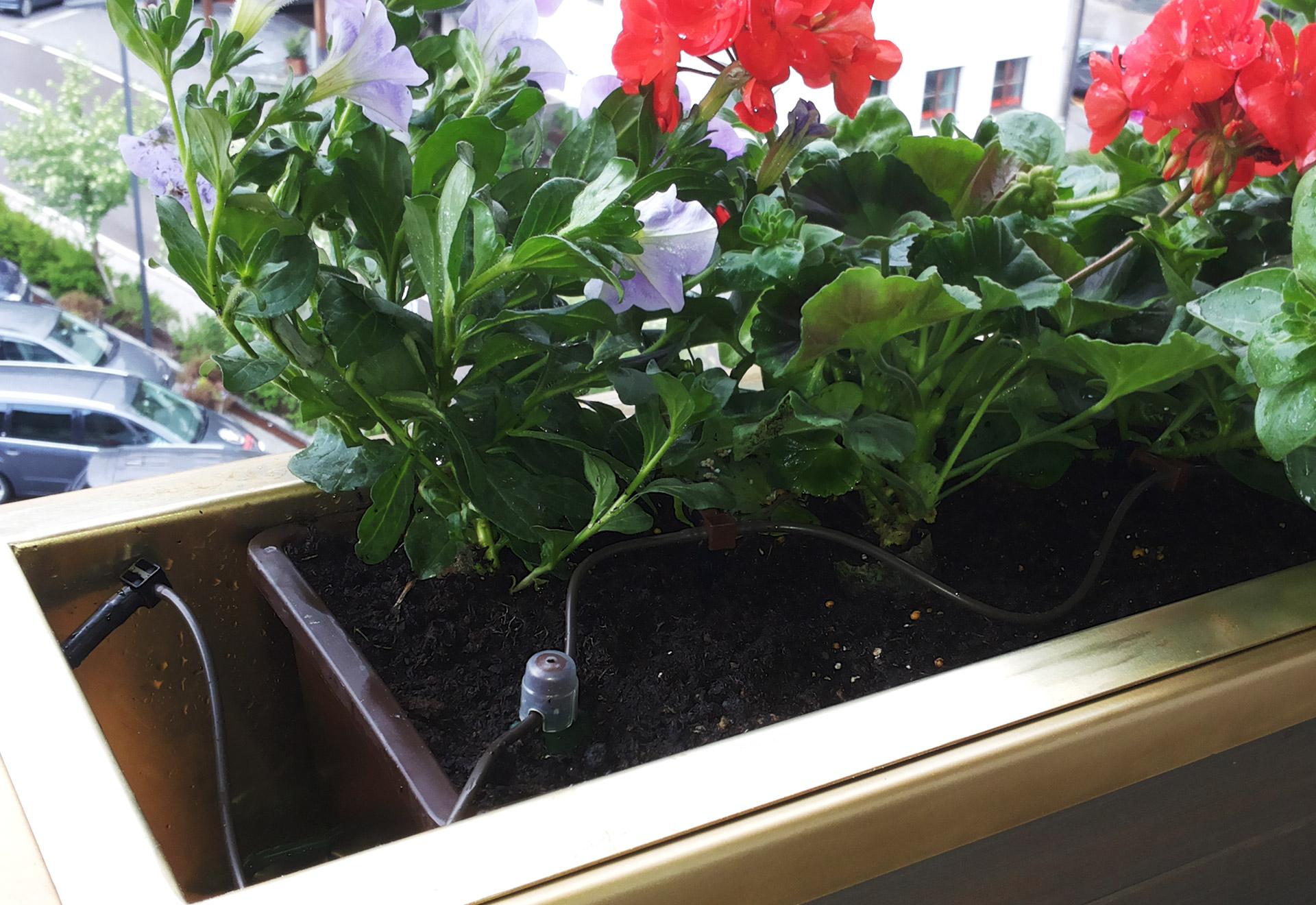Saniflor Flowertablets